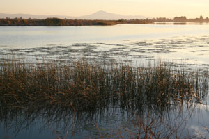 Estuarine Wetland at Georgiana Slough in the Sacramento-San Joaquin Delta